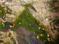 2019-04-12-Brunnen-Übergang-zum-Fels